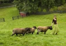 Victoria Sheep_X9723